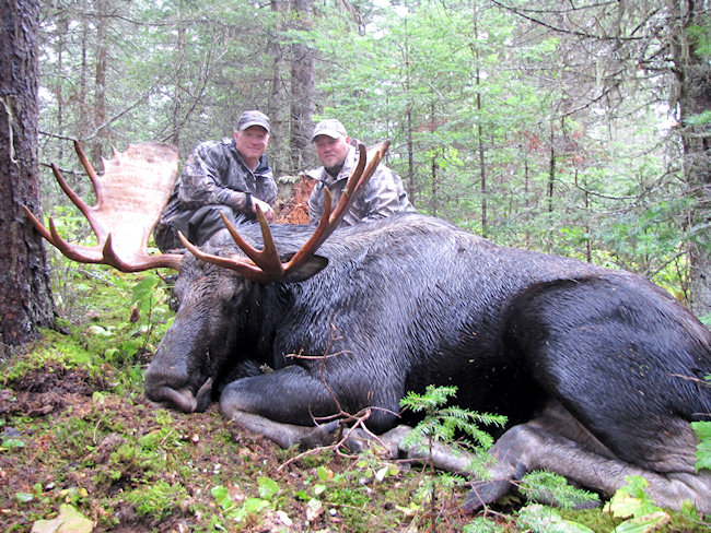 the relations between moose hunting and road accidents in vermont Waterbury, vt - vermont moose hunting permit lottery applications are available on the vermont fish and wildlife department's website (wwwvtfishandwildlifecom), and printed applications will be at vermont license agents statewide in early april.