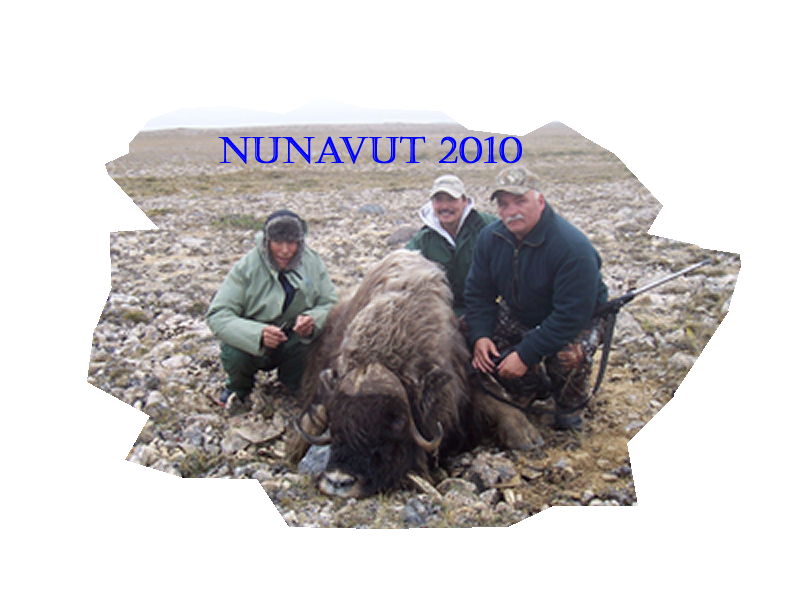 Northern Canada successful Musk Ox hunt